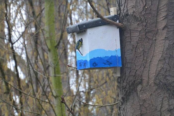 Zum Schutz der Kastanien wurden Meisenkästen in der Allee am Rurdamm aufgehängt. So können die Meisen die für Kastanien schädlichen Miniermotten fressen.